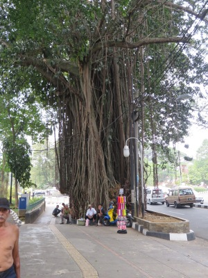 Tree Besar